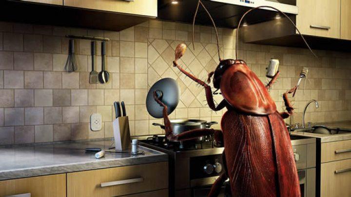 Тараканы насекомые борьба