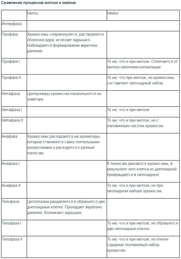 Таблица развитие яйцеклетки и сперматозоида отличия и сходства