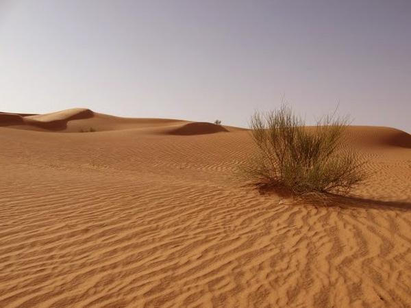 foto-pustyni-saxary-2