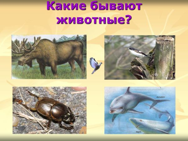 Главные признаки насекомых - схематический рисунок