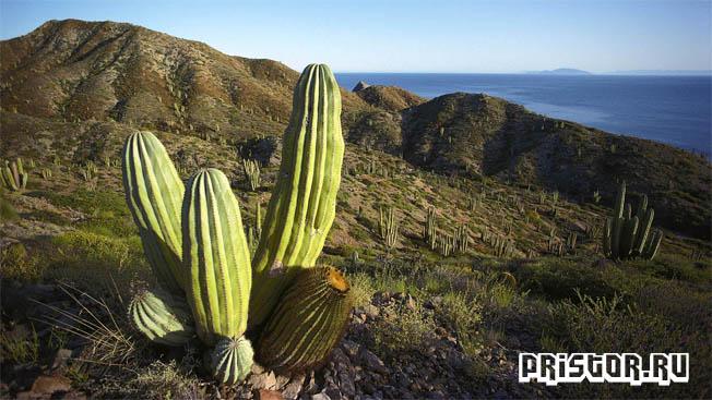 creda-obitaniya-kaktusa-3