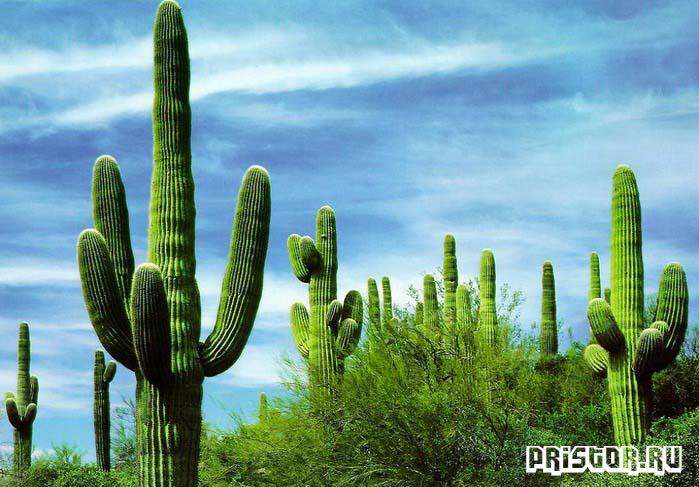 creda-obitaniya-kaktusa