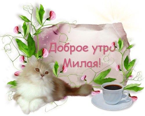 Открытка пожелания доброго утра девушки