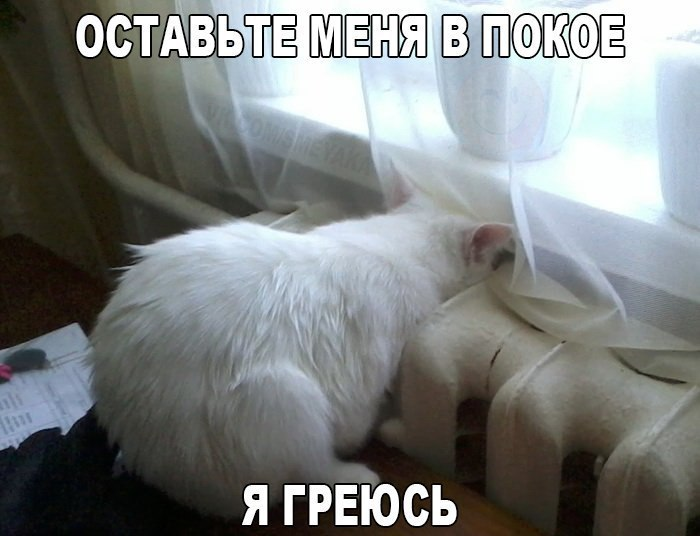 Прикольные картинки с животными 10