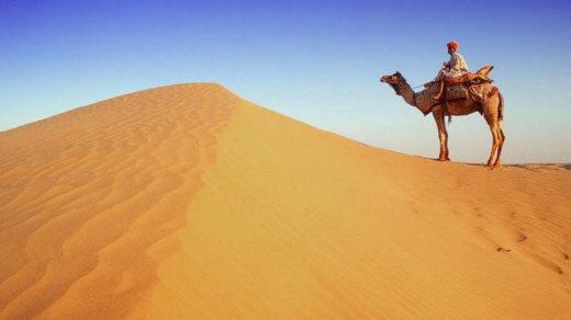 схема цепи питания характерной для пустыни