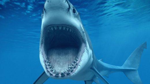 самая большая акула в мире фото