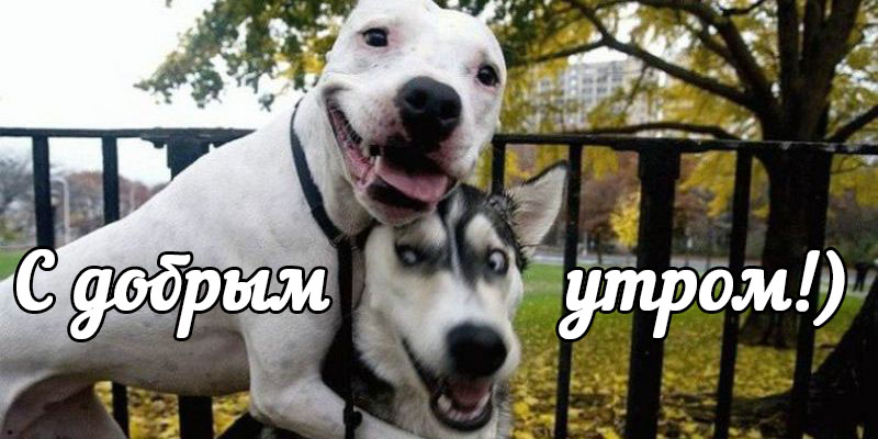 Kartinki_dobrom_utrom_smeshnyie4