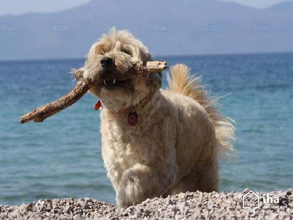 Картинки домашних животных для детей - красивые фото и картинки 9
