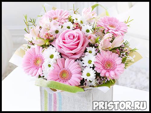 Гербера цветок фото, фото букетов герберы - подборка 11