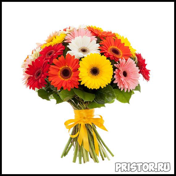Гербера цветок фото, фото букетов герберы - подборка 5