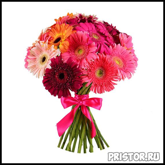 Гербера цветок фото, фото букетов герберы - подборка 7