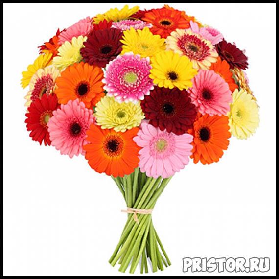 Гербера цветок фото, фото букетов герберы - подборка 9