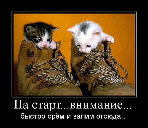 Демотиваторы про котов, смешные демотиваторы - коты и кошки 1