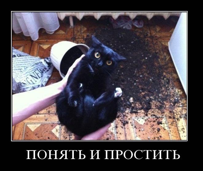 Демотиваторы про котов, смешные демотиваторы - коты и кошки 13