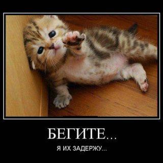 Демотиваторы про котов, смешные демотиваторы - коты и кошки 3