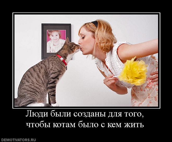 Демотиваторы про котов, смешные демотиваторы - коты и кошки 5