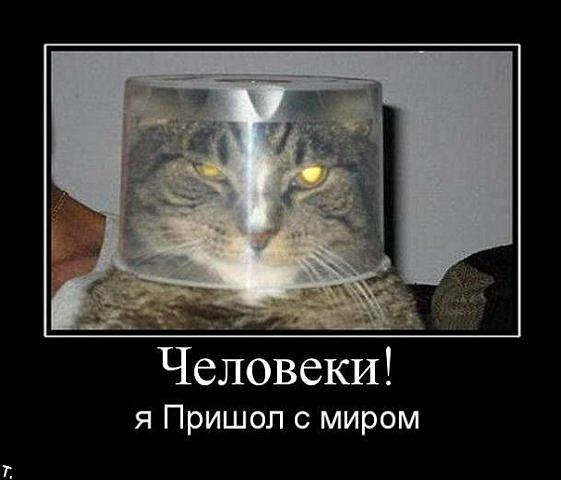 Демотиваторы про котов, смешные демотиваторы - коты и кошки 6