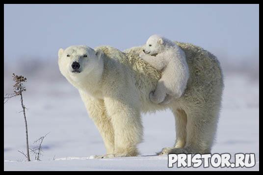 Заповедники зоны арктических пустынь - популярные заповедники Арктики 8