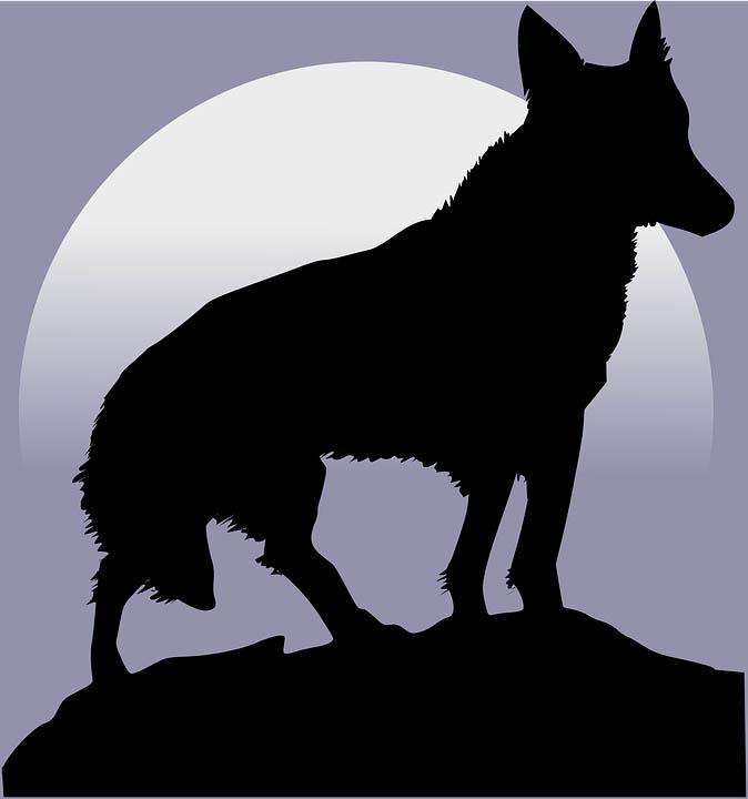 Картинка волка для детей, прикольные картинки волков - смотреть 3