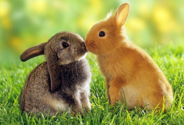 Картинки зайцев для детей, красивые картинки зайчиков для детей 10