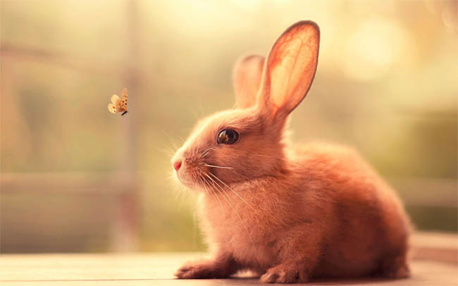 Картинки зайцев для детей, красивые картинки зайчиков для детей 3