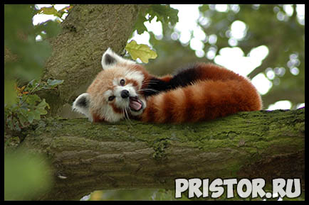 Картинки необычных животных, необычные животные - фото и картинки 1
