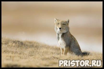 Картинки необычных животных, необычные животные - фото и картинки 11