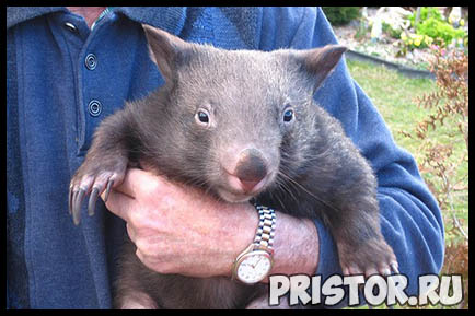 Картинки необычных животных, необычные животные - фото и картинки 16