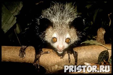 Картинки необычных животных, необычные животные - фото и картинки 19