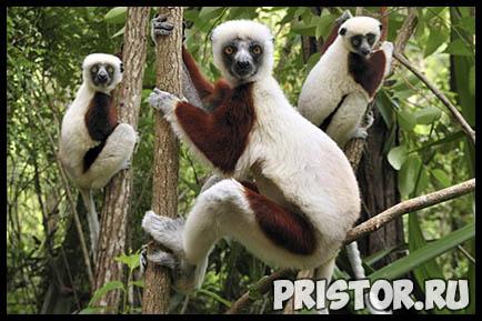 Картинки необычных животных, необычные животные - фото и картинки 8