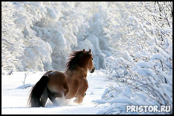 Красивые фото зимней природы, зима - красивые фото природы 3