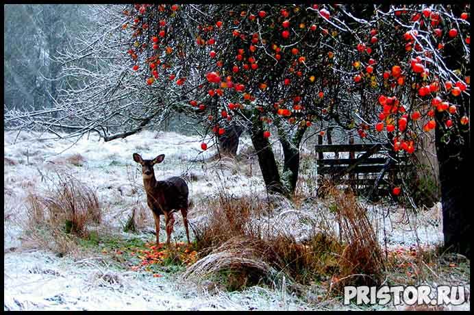 Красивые фото зимней природы, зима - красивые фото природы 5