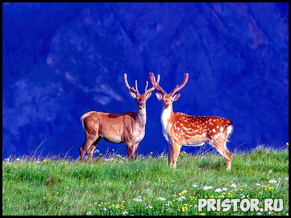 Красивые фото природы России, фото - пейзажи природы России 15