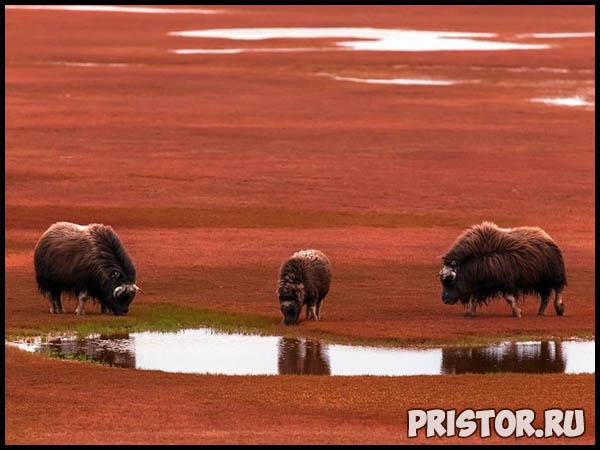 Красивые фото природы России, фото - пейзажи природы России 20