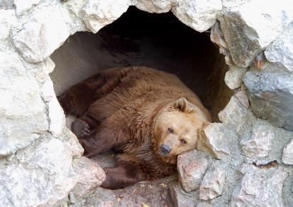 Медведь в берлоге картинки для детей - красивые и прикольные 4