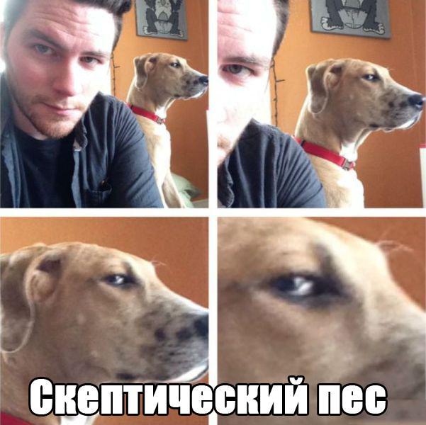 Прикольные фото с животными до слез, смешные фото животных 10