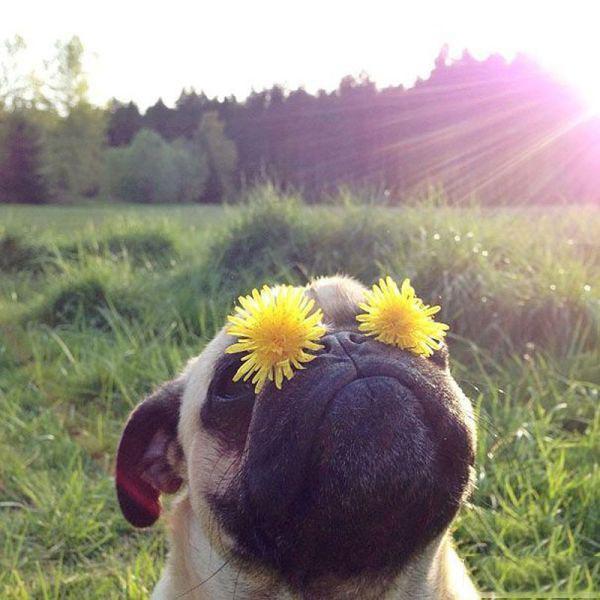 Прикольные фото с животными до слез, смешные фото животных 13