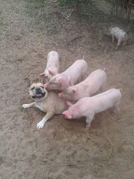 Прикольные фото с животными до слез, смешные фото животных 2