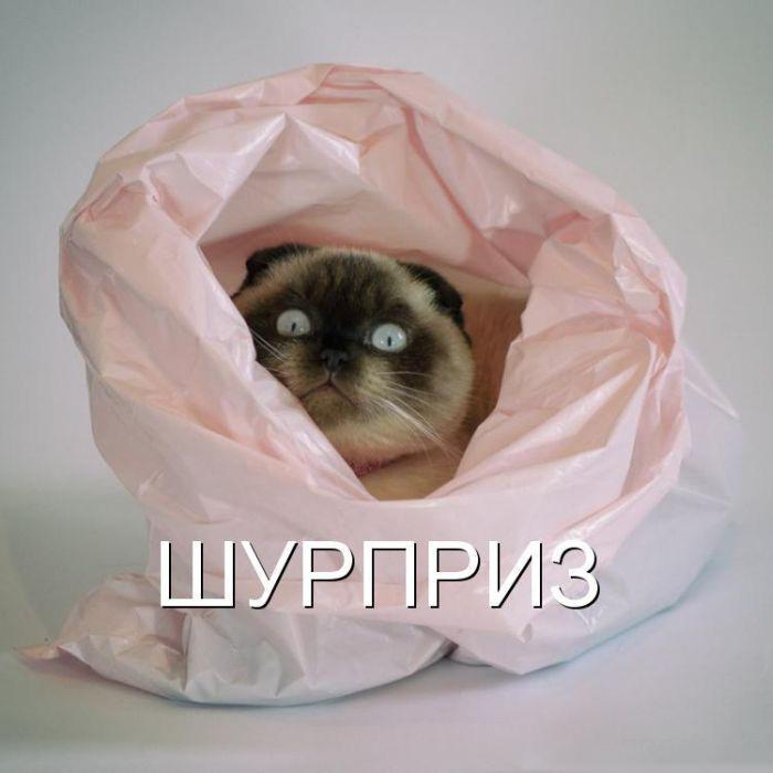 Прикольные фото с животными до слез, смешные фото животных 3