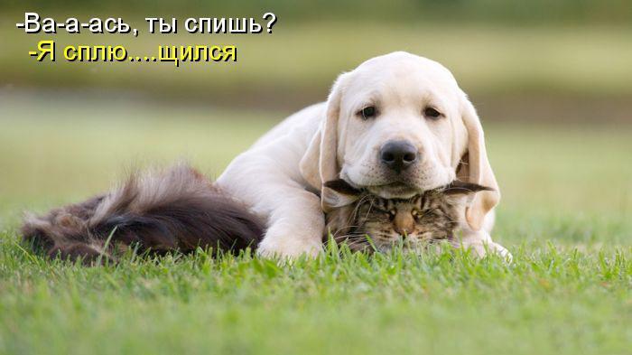 Прикольные фото с животными до слез, смешные фото животных 7