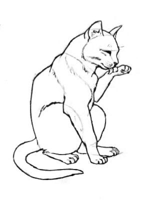 Рисунок кошки карандашом - прикольные и красивые картинки 1