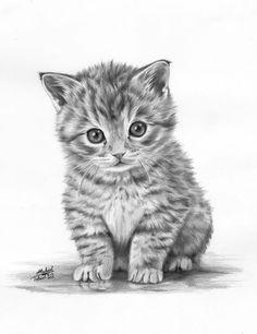 Рисунок кошки карандашом - прикольные и красивые картинки 2