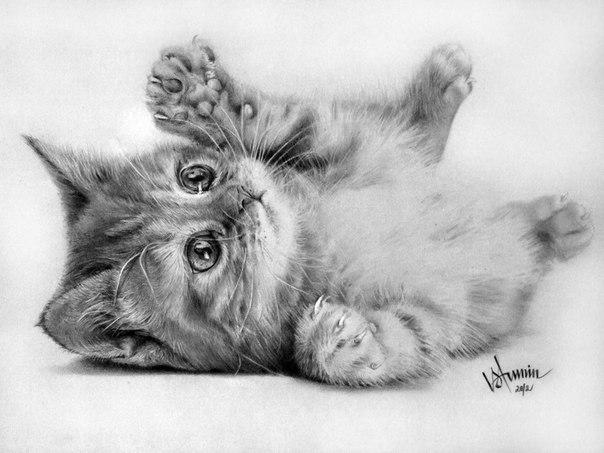 Рисунок кошки карандашом - прикольные и красивые картинки 5