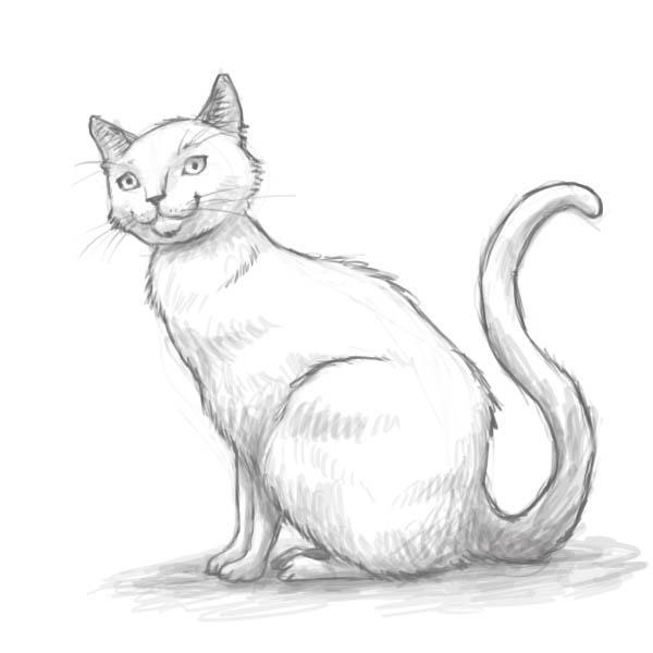 Рисунок кошки карандашом - прикольные и красивые картинки 6