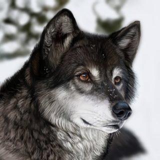 Скачать фото волка бесплатно 13