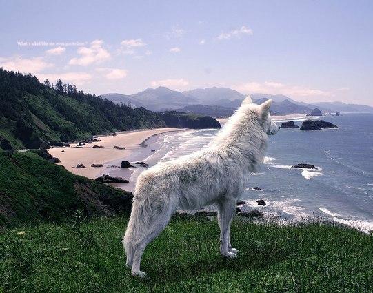 Крутые картинки на аву волков