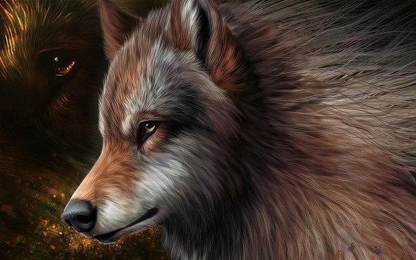 Скачать фото волка бесплатно 3