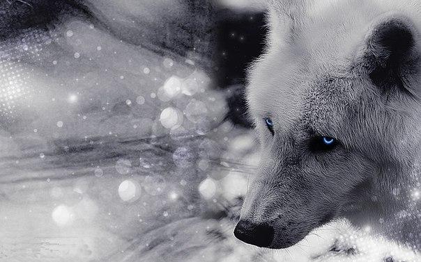Скачать фото волка бесплатно 4