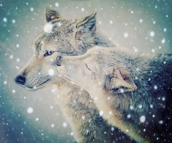 Картинки на аву волки красивые