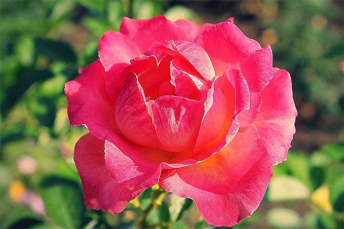 Скачать цветы, картинки - бесплатно 12